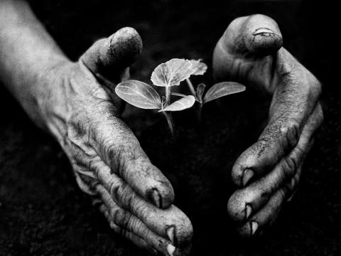 Fotó: Eifert János: Kertész keze / Gardener's Hand (Tarnaméra, 1978)