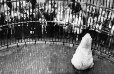 Fotó: Friedrich Seidenstücker: Részlet a Berliner Zoo című sorozatból, c. 1929 © Friedrich Seidenstücker